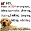 Thumbnail Teaching Your Dog How To Be Obedient
