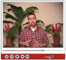 Thumbnail Video Marketers Toolkit  - Master Resale Rights