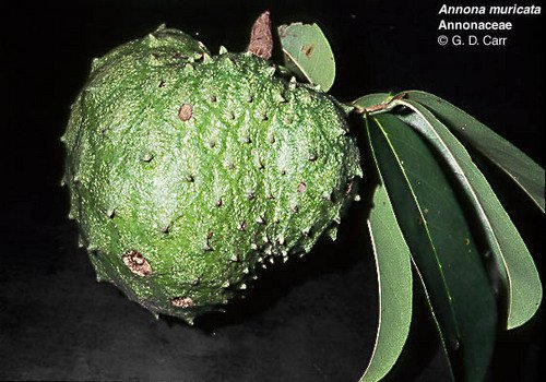 Pay for Jamaican natural cancer cure recipe