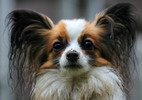 Thumbnail Dog, Royalty Free Stock Images