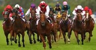 Thumbnail HORSE  RACING   SOFTWARE