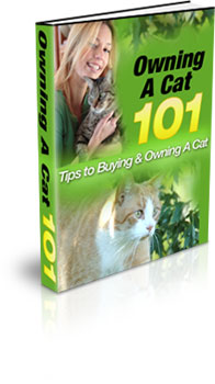 Pay for Buying and Owning a Cat