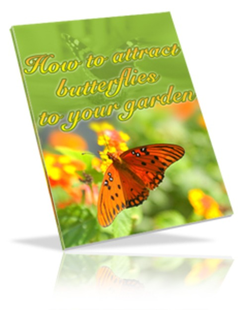 Pay for Attract Butterflies to Your Garden