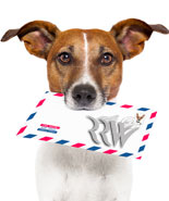 Pay for Dog Training Affiliate Package