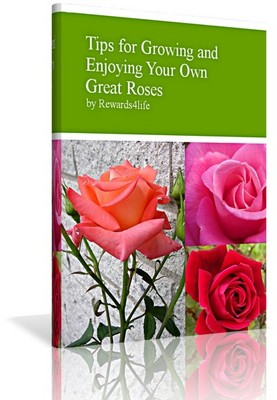 Pay for Tips for Growing Your Own Great Roses