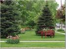 Thumbnail Dream Lawn