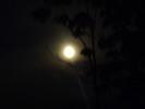 Thumbnail Full Moon