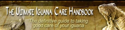 Thumbnail The Ultimate Iguana Care Seminar