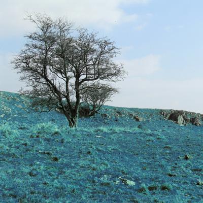 Thumbnail Fields of Blue