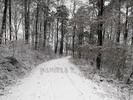 Thumbnail Winter forest road in Germany (Deutschland)