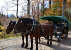 Thumbnail Oberlander horse drawn carriage, Fussen, Bavaria, Germany