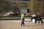 Thumbnail man training his black warmblood horse, Germany