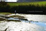 Thumbnail man cleaning lake, saving nature, clarifying water, Germany