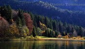 Thumbnail picturesque landscape of bavarian Alps and lake Alpsee