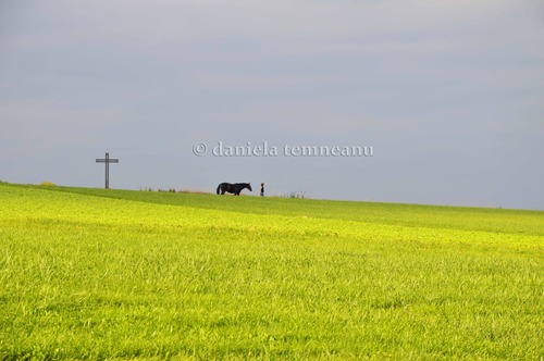 Pay for Woman with black horse along yellow field and gray sky