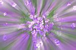 Thumbnail flower explosion