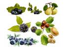 Thumbnail vector fruits berries.zip