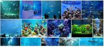 Thumbnail Aquarium Tank Instant Mobile Video Site (MRR)