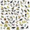 Thumbnail Ornithology