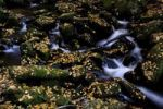 Thumbnail Flowing stream, mossy stones and autumn leaves, Altschoenau, Bavarian Forest, Bavaria, Germany, Europe