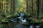 Thumbnail Mountain stream Kleine Ohr in autumn, National Park Bavarian Forest, Bayerischer Wald, Lower Bavaria, Bavaria, Germany, Europe