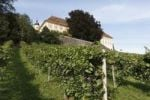 Thumbnail Vineyard at Stainz Palace, Schilcher Weinstrasse, Schilcher Wine Route, Styria, Austria, Europe