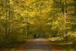Thumbnail Forest road in an autumnal beech forest Fagus sylvatica, Germany, Europe
