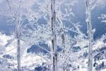 Thumbnail Winter on Klak Mountain, Mala Fatra Mountains, protected landscape area, Slovakia, Europe