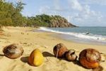 Thumbnail Coconuts on Orchid Beach, Hinchinbrook Island, Hinchinbrook Island National Park, Queensland, Australia
