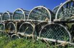 Thumbnail lobster traps along the coast, Canada