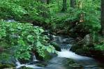 Thumbnail Forest Brook in spring, national park Bavarian Forest, Germany Kleine Ohe