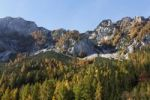 Thumbnail Autumnal larch trees on Mount Trenchtling, Tragoesstall Valley, Styria, Austria, Europe