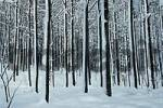 Thumbnail Deciduous Forest in winter, Bavaria, Germany
