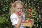 Thumbnail Young girl biting into a freshly picked apple