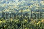 Thumbnail View over forested landscape in autumn Kleiner Falkenstein Bayerischer Wald Lower Bavaria Germany