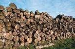 Thumbnail Pile of Wood, North Rhine-Westphalia, Germany