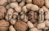 Thumbnail Peanuts and walnuts Arachis hypogaea, Juglans regia