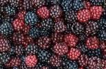 Thumbnail Blackberries Rubus fruticosus