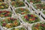 Thumbnail Floristry, colourful berry wreaths in pressboard boxes