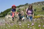 Thumbnail Mother and daughter on a donkey hike, Cevennes, France, Europe