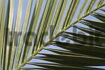 Thumbnail Palm leaf detail