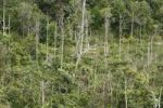 Thumbnail Secondary rainforest, reforestation, Samboja, East Kalimantan, Borneo, Indonesia, Southeast Asia