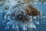 Thumbnail Hoarfrost covered grass in moor, Germany