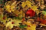 Thumbnail Autumn leaves and apple