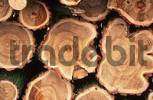 Thumbnail Pile of wood, tree trunks