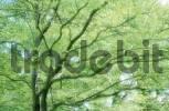Thumbnail Tree top
