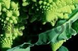 Thumbnail Cauliflower Brassica oleracea var. botrytis Romanesco