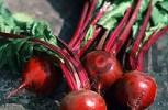 Thumbnail Beet roots Beta vulgaris vulgaris