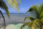 Thumbnail View through palm trees of the shallow water of the South Water Caye coral reef, Caribbean Sea, Belize, Central America