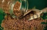 Thumbnail Mustard seeds